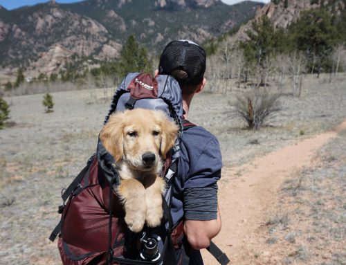 Travelling Internationally With Your Pets